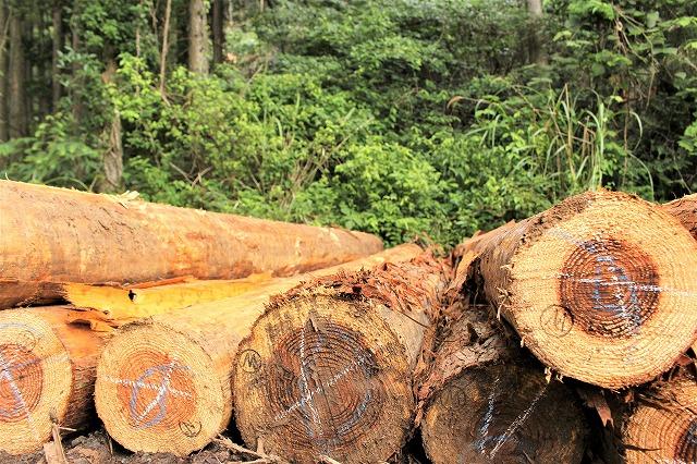 木々の売買 合同会社Wood one