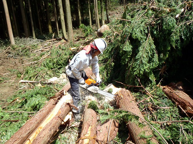 素材生産 合同会社Wood one